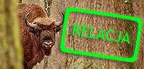 Łowy na żubra II – 11-13 XII 2015 Łowy na żubra II – 11-13 XII 2015