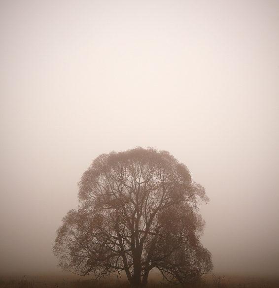 Drzewo we mgle, sepia