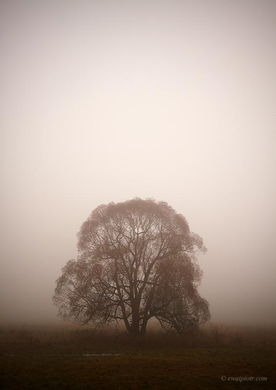 Drzewo we mgle