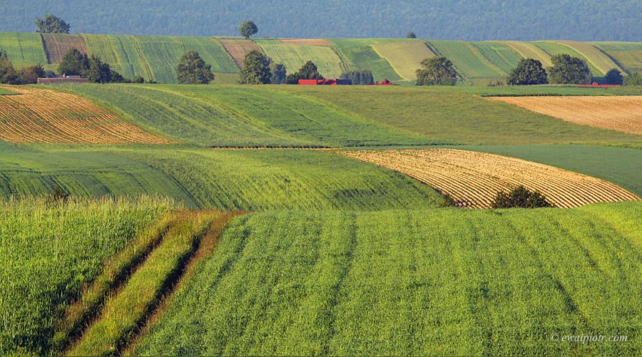 Świętokrzyskie pola, fale, pejzaż