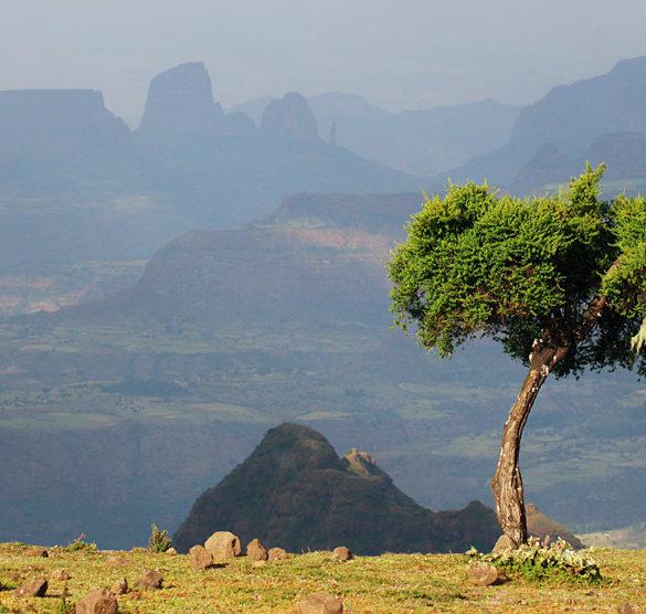 Etiopia, Góry Semien, Drzewo i góry