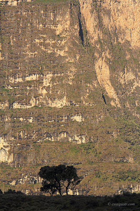 Etiopia, góry Semien, Siemen
