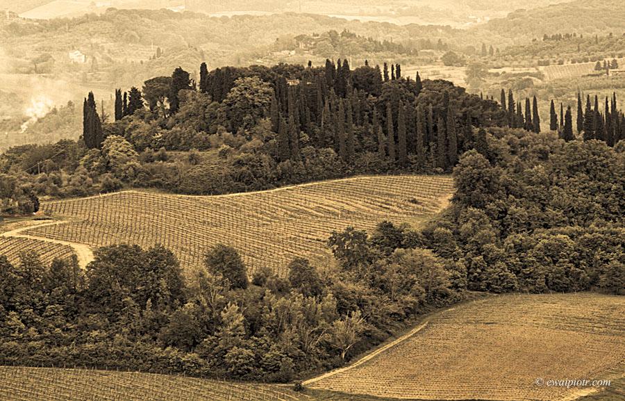 Dolina San Gimignano