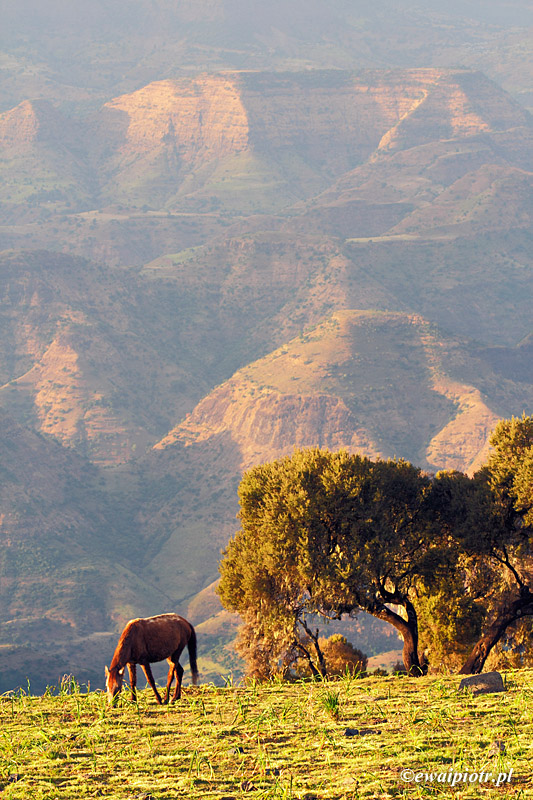 Siemen, Semien, Etiopia