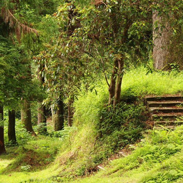 Ogród Botaniczny w Batumi, reguła zdepniętej spirali