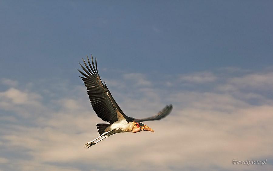Marabut w Etiopii