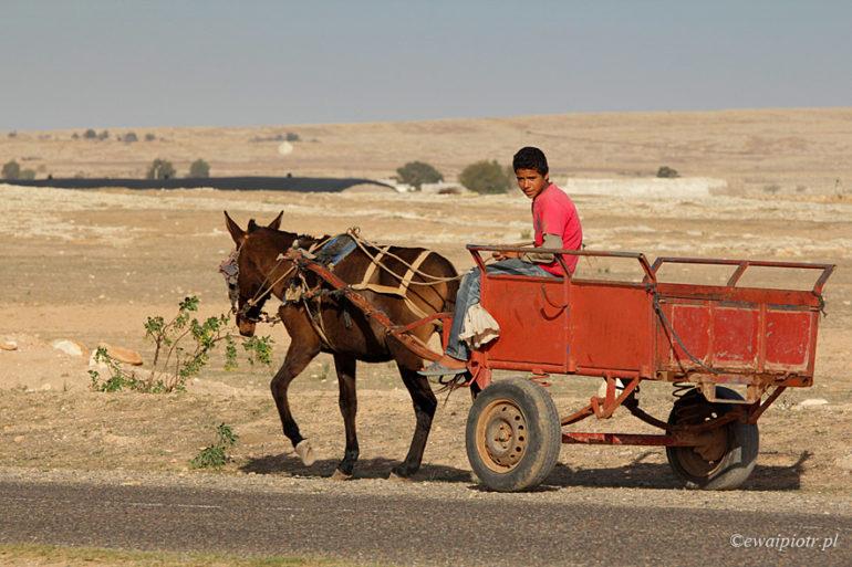 Maroko, chłopiec na wozie, osioł ciągnie wóz