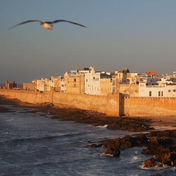 Essaouira, Maroko, mewa nad fortecą