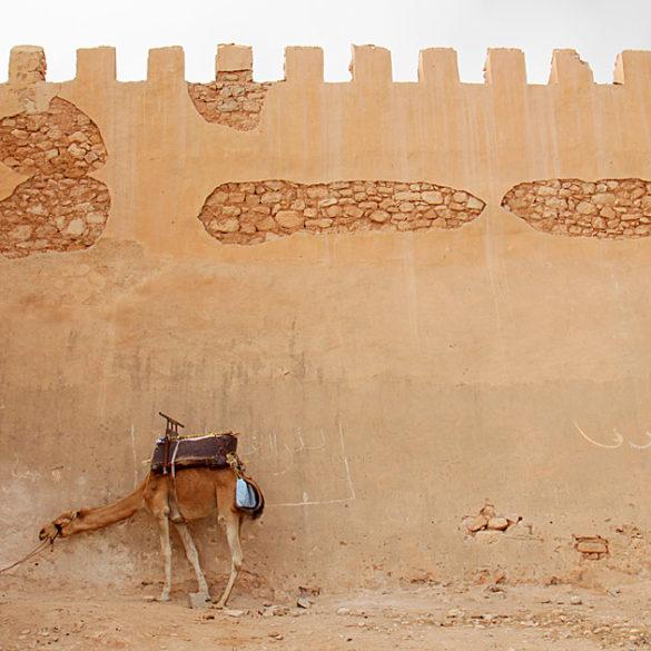Agadir, Wielbłąd pod murem, Maroko