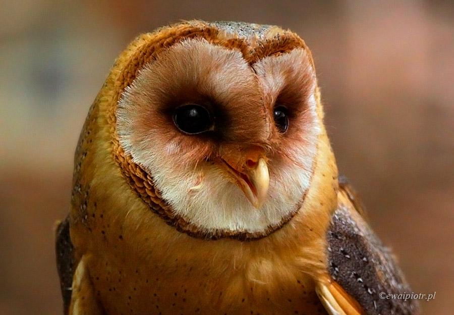 warsztaty fotografowania ptaków