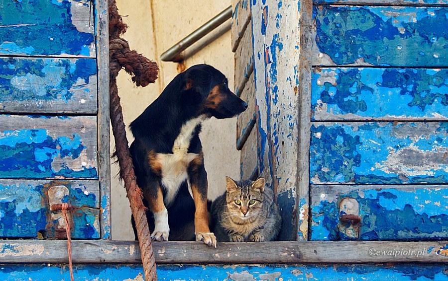 Jak kot z psem, Essaouira, Maroko