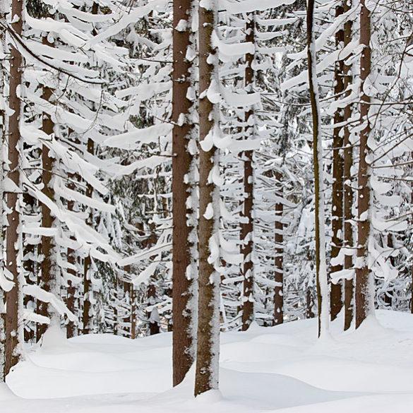 Zimowy las, fotowyprawa