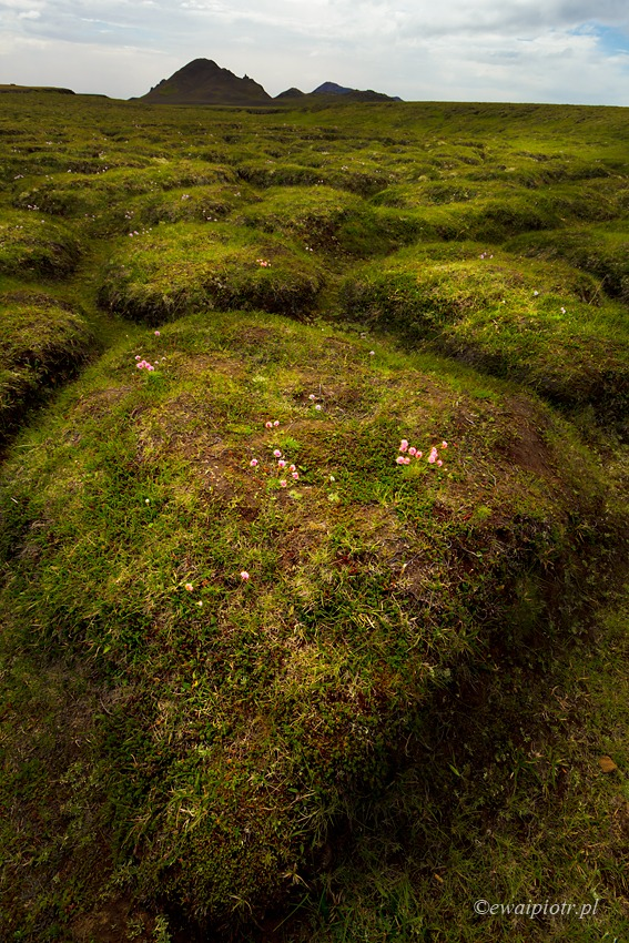 Islandia, krajobraz powulkaniczny