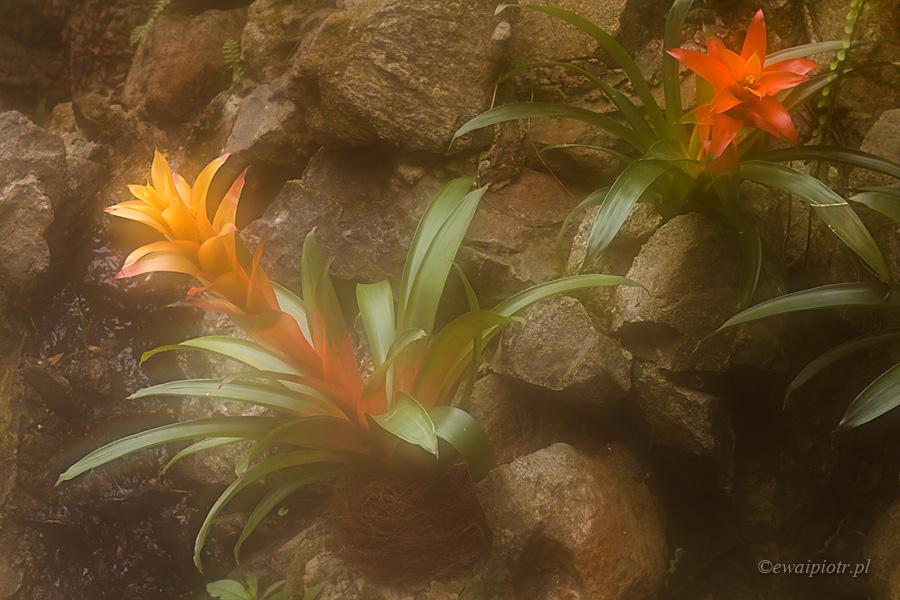 Kwiaty z Palmiarni Lubiechowskiej