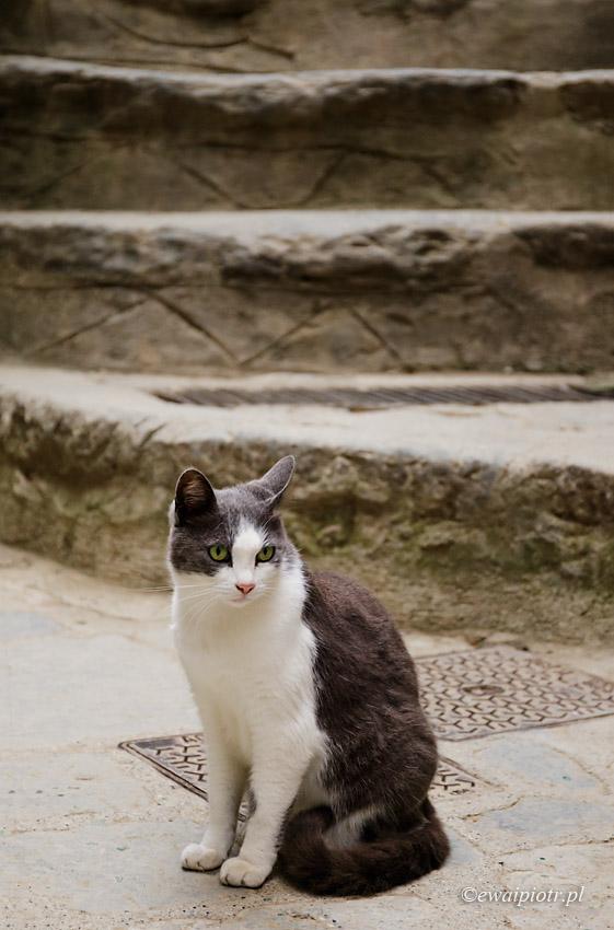 Kot z Vernazzy