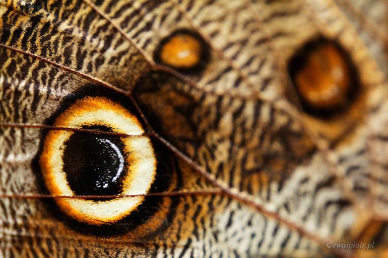 Motyle oczy. Collodi