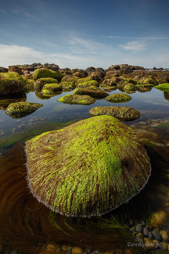 Plaża zielonych żółwi, Islandia