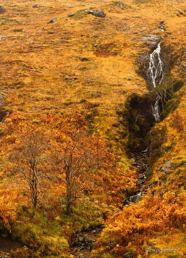 Wodospad i drzewa, Szkocja