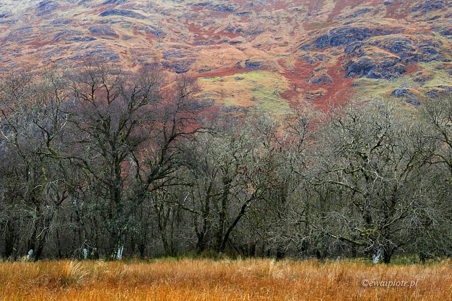 Listopad w Szkocji