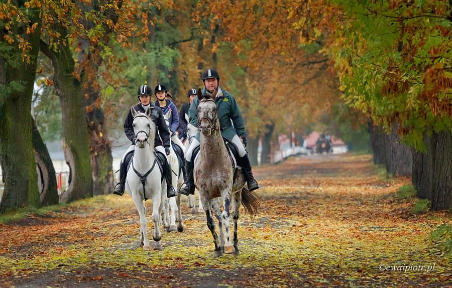 Araby jesienią, stadnina koni w Michałowie