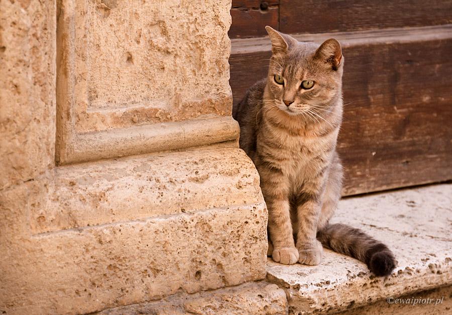 Toskański kot