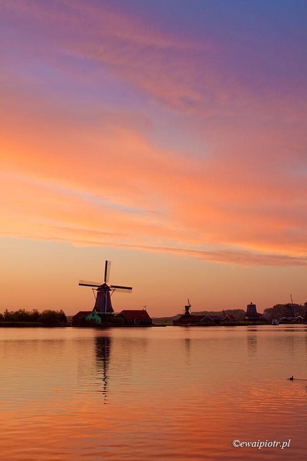 Wiatraki o wschodzie, Holandia