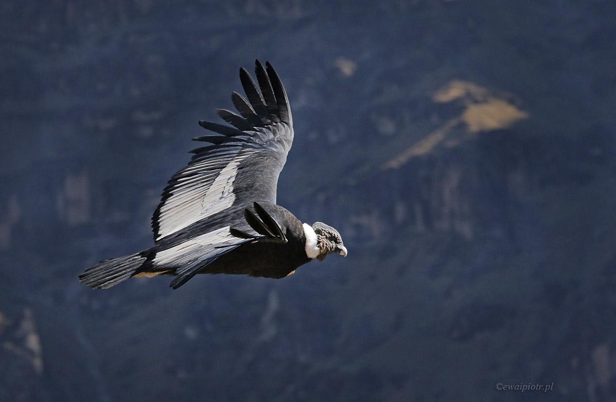 El Condor Pasa w Peru