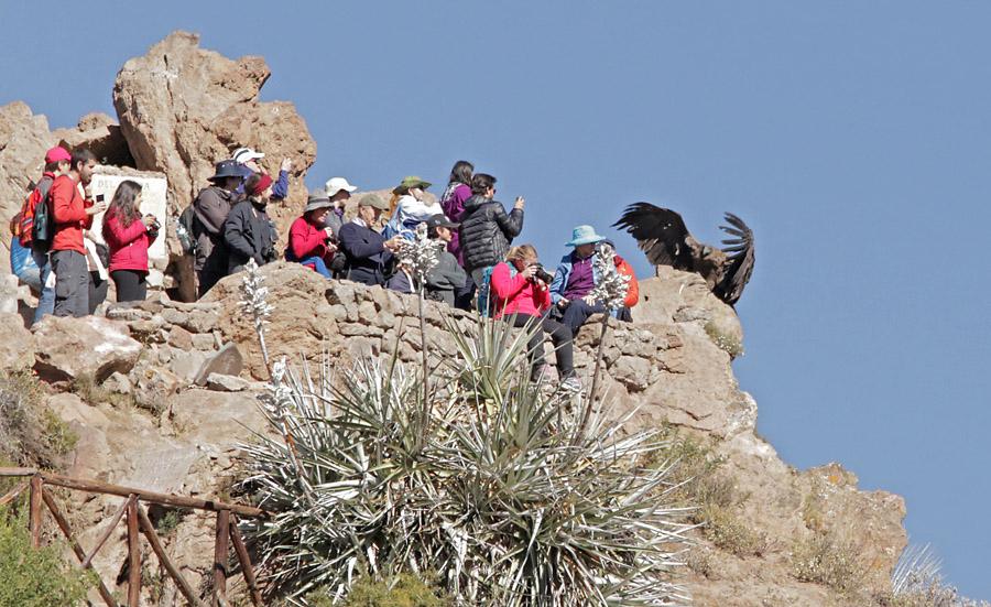 El Kondor pasa turystów, Peru