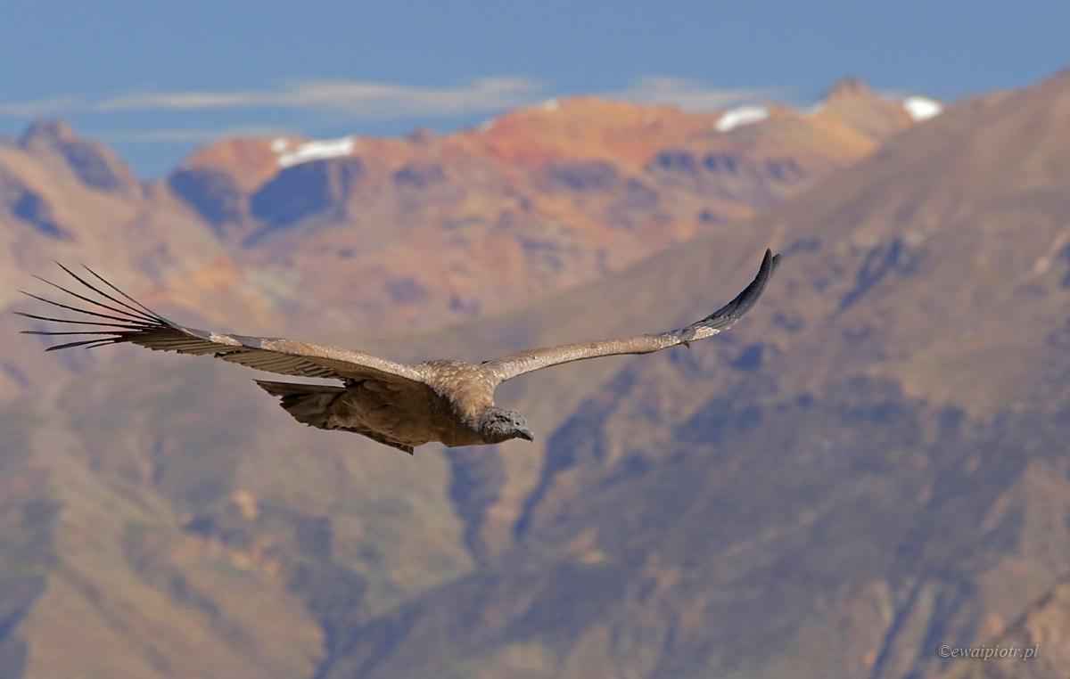 El Condor Pasa, Peru