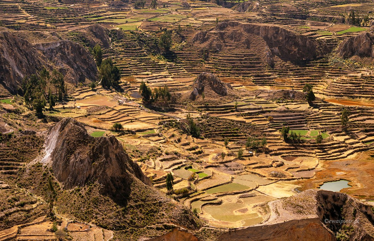 Tarasy uprawne w Andach, Peru