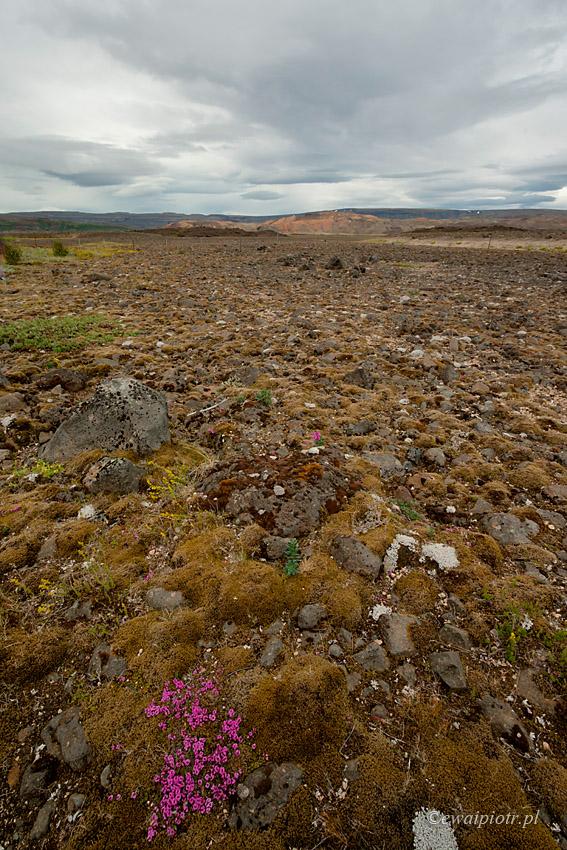 Islandzkie kwiatki II - ultraszeroko z daleka