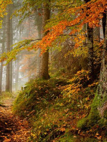 jesień w lesie, Bawaria