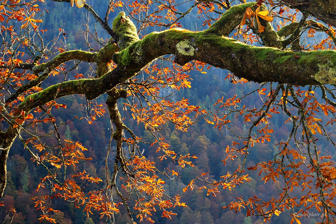 W bawarskim lesie