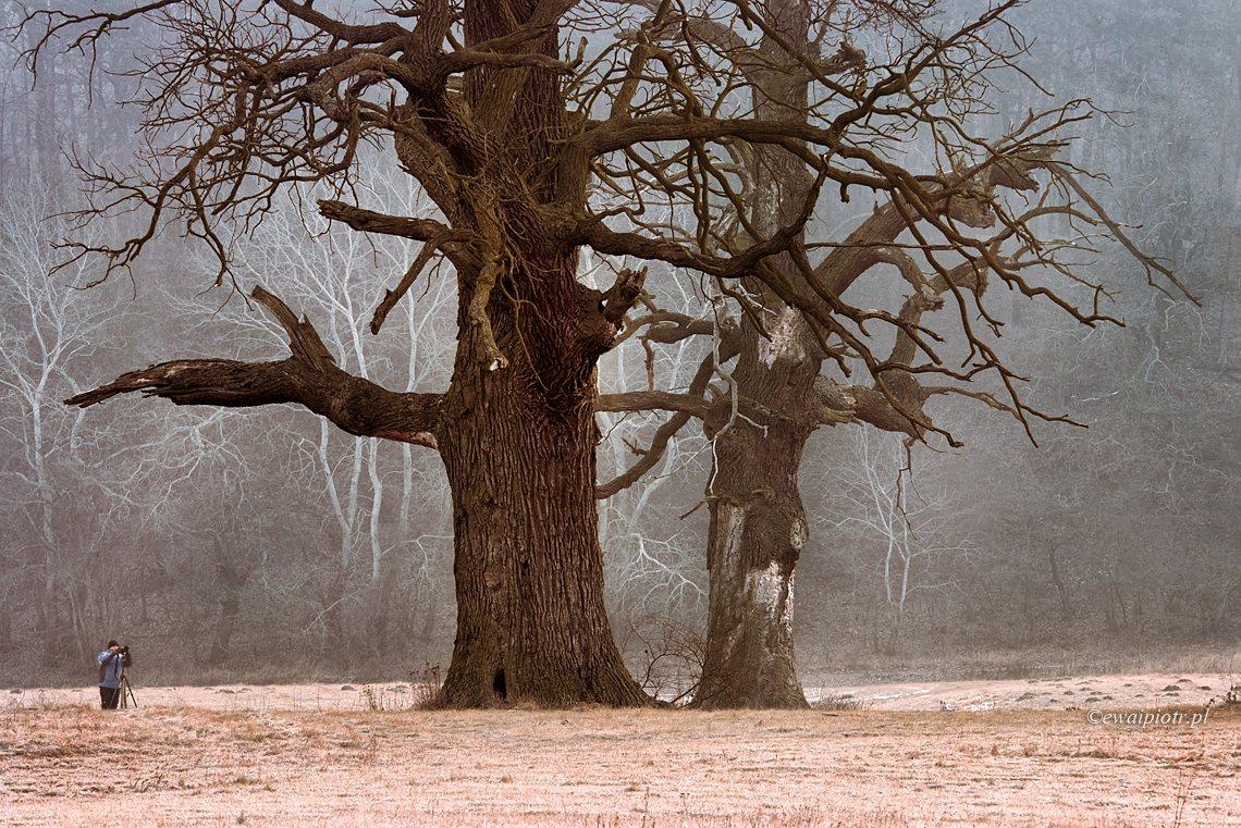 Zima w Rogalinie
