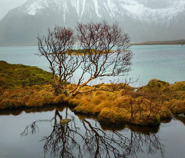 Odbicie drzewa, fotowyprawa na Lofoty
