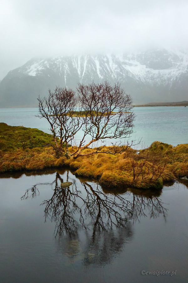 Odbicie drzewa, Lofoty