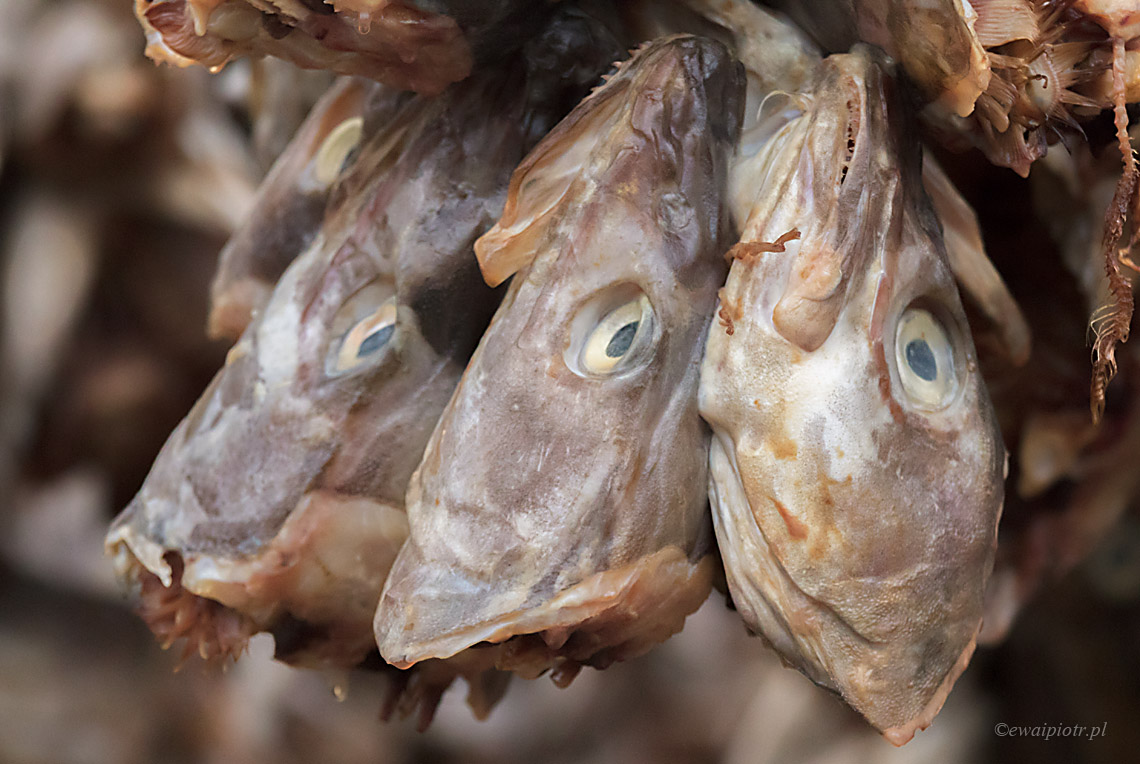 Trzy rybki, Lofoty