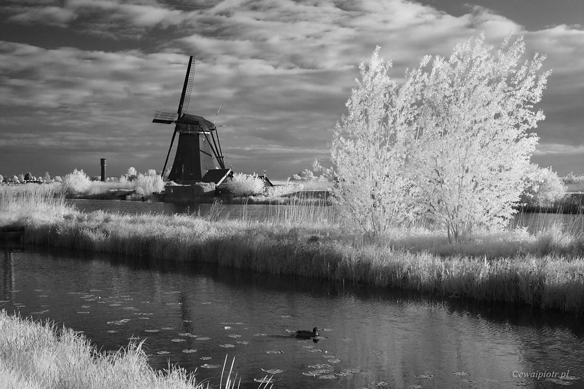 W Holandii, nad wodą