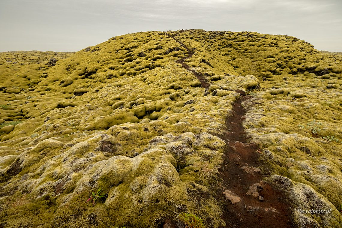 Omszałe pole lawowe, Islandia