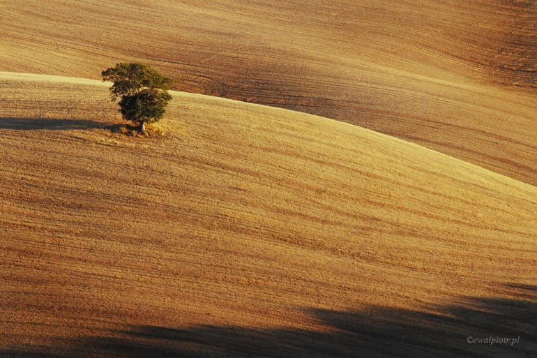Jesienne drzewo, Toskania