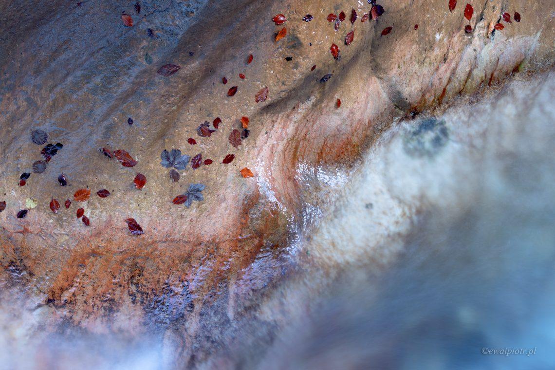 Strumień i liście, fotowyprawa do Bawarii