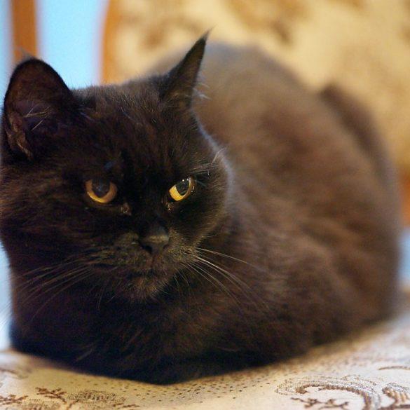 Hasselblad X1D, ISO 12800 i czarny kot