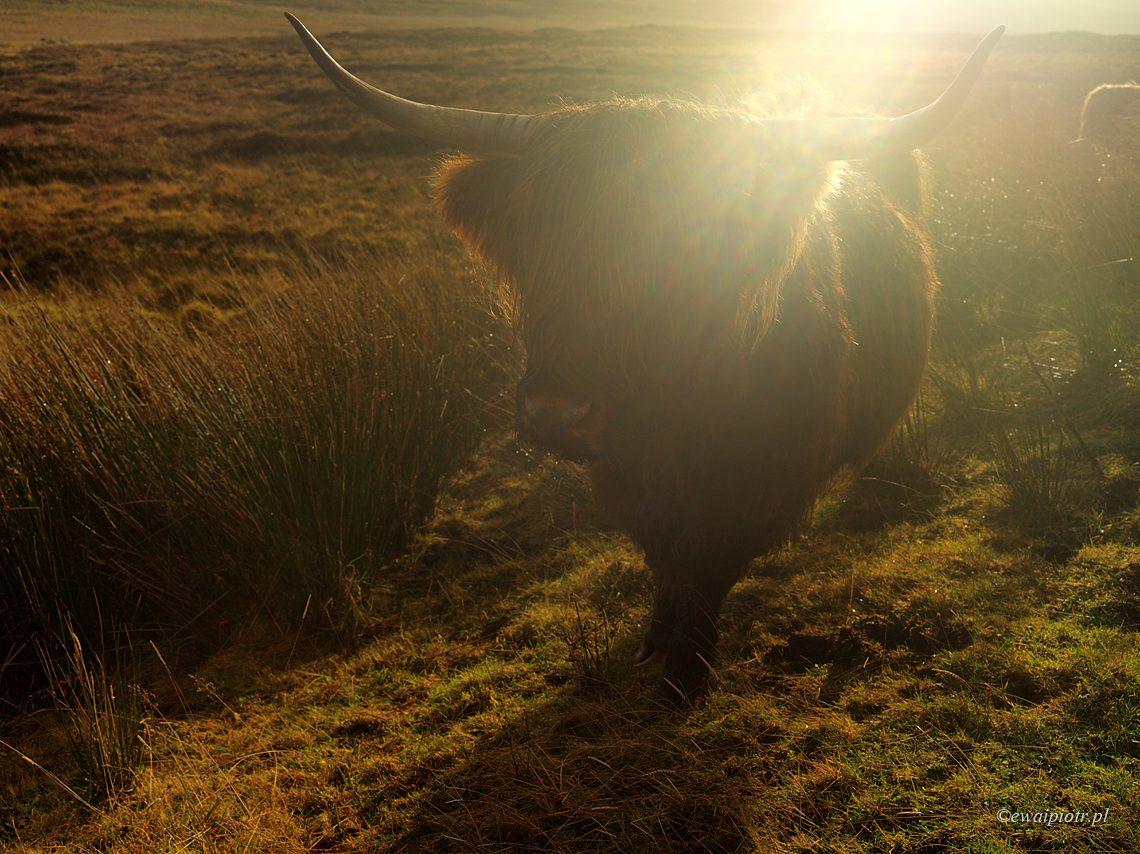 Fotowyprawa do Szkocji, Hasselblad X1D
