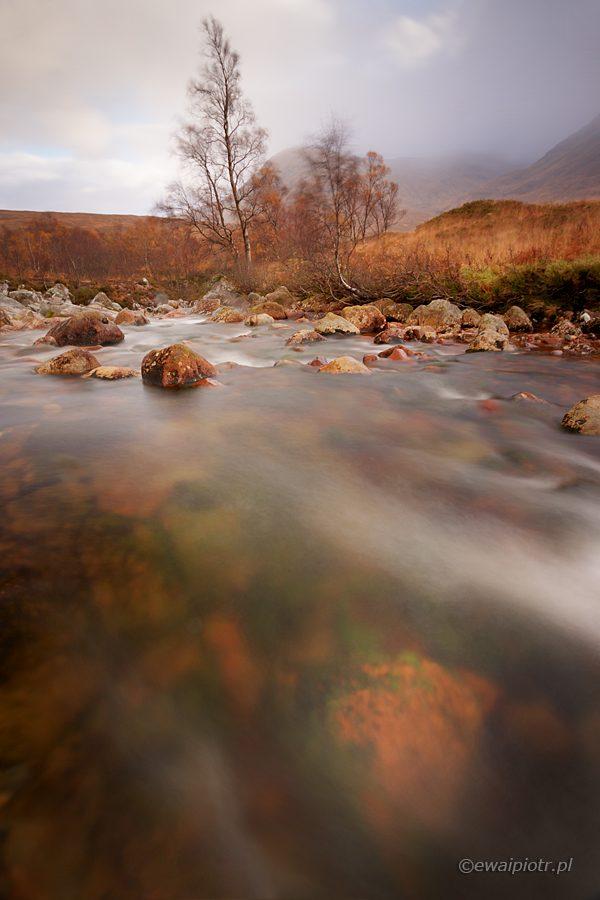 Brzozy nad Etive Moor, Szkocja