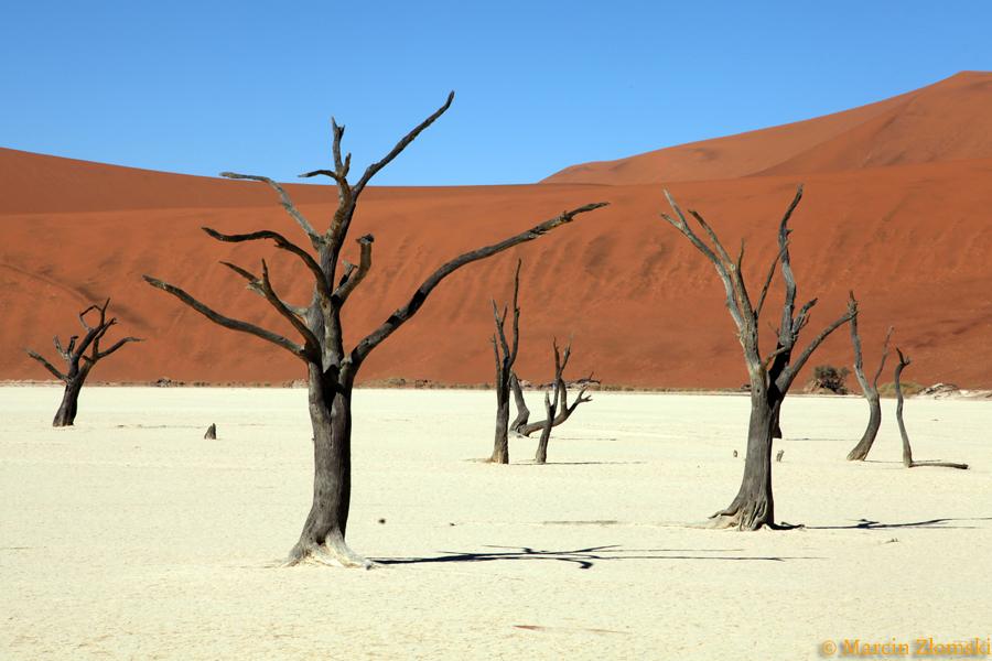 Fotowyprawa Namibia, maj 2019, martwy las na pustyni Namib