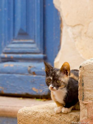 Kot, drzwi, Kreta - kompatybilność obiektywów do Nikona