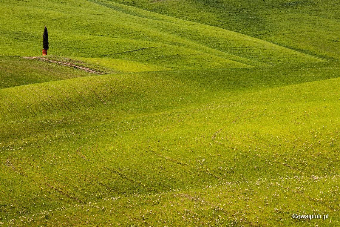 Wiosna na wzgórzach, Toskania, fotowyprawa