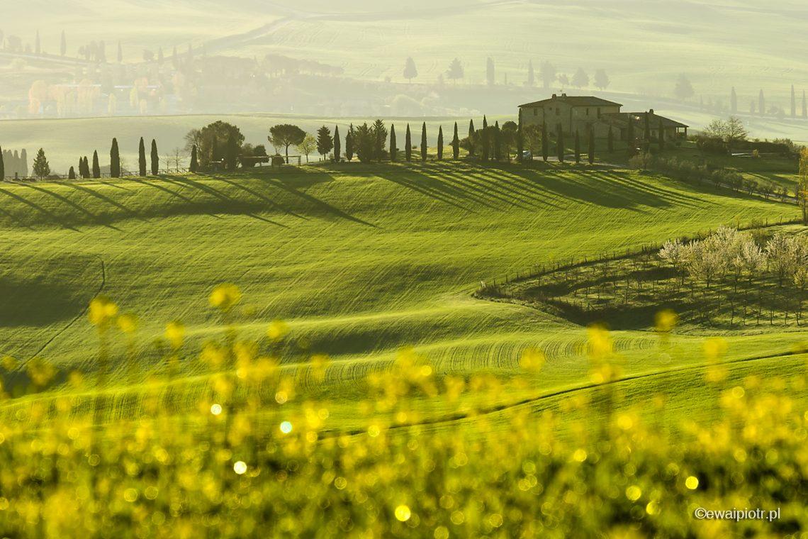 Wiosna w dolinie Val d'Orcia, Toskania, warsztaty fotograficzne