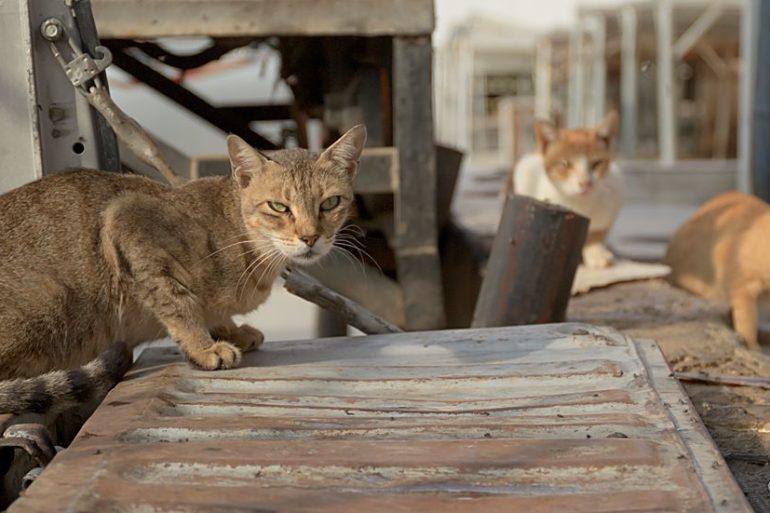 Kot bojowy, targ ryb, fotowyprawa, Oman