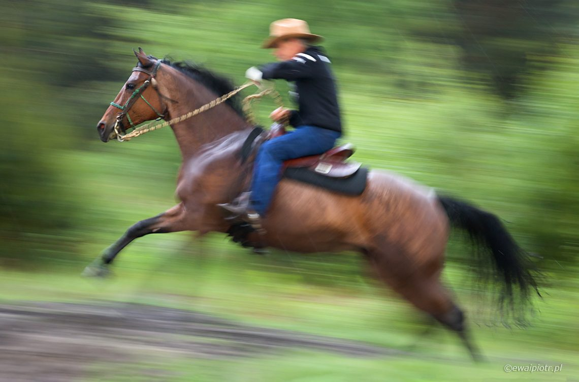 jeździec, panoramowanie, warsztaty fotograficzne, Świętokrzyskie